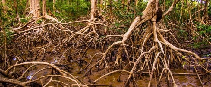 Fascinujúce mangrovové lesy
