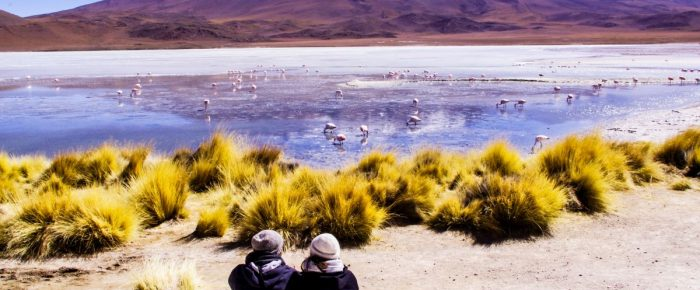 Reportáž – Útek do bolívijskych hôr Altiplana – soľná púšť, lagúny a tisíce plameniakov.