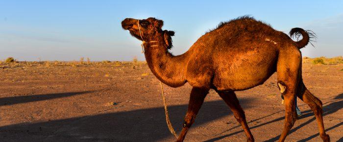 Skryté tajomstvá hodvábnej cesty. Púštna oáza v Otrare. Kazachstan. (Reportáž)
